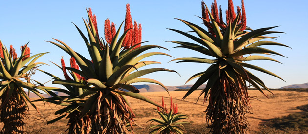 Flora - The Eastern Cape