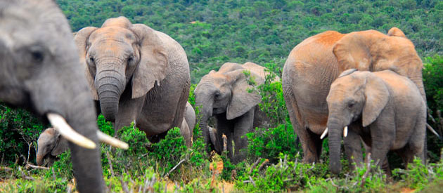SANParks : ADDO ELEPHANT NATIONAL PARK www.south-africa-info.co.za