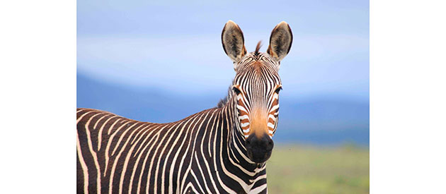 MOUNTAIN ZEBRA NATIONAL PARK