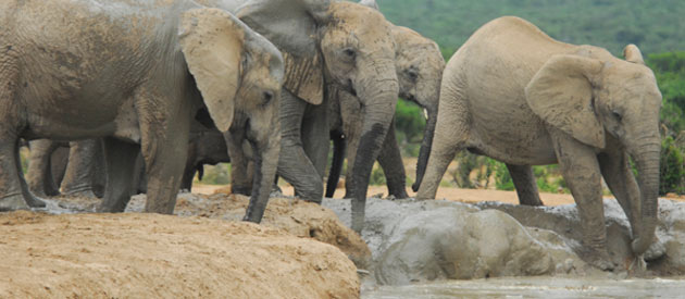 Addo in the Eastern Cape, South Africa