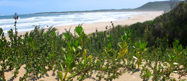 Oyster Bay is situated on the Sunshine coast of the Eastern Cape province in South Africa.
