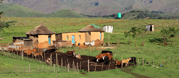 Peddie is a small town in the Amathole district of the Eastern Cape province of South Africa.